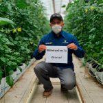 Los Productores de Divine Flavor en México se preparan para sus programas de cosecha de verano, en medio de la pandemia de coronavirus