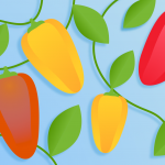 Divine Flavor Sweet Mini Peppers: The perfect snacking commodity