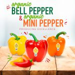 Bell Peppers and Sweet Mini Peppers- Producing Excellence