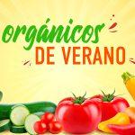 Product Spotlight – Summer Organics español