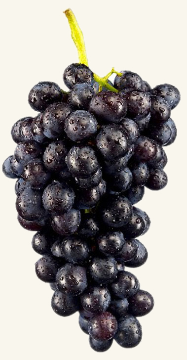 Black Seedless Grapes Table Grapes Black Seedless